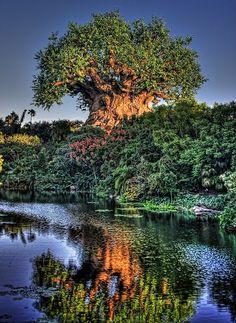 Tree of life at Disneys Animal Kingdom park places-i-want-to-go