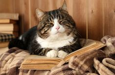 From now on it will be this way! I Miss My Cat, Cat Sleeping, Cat Art, Cats And Kittens, The Book, Funny Cats, Cute Animals, Kitty, Pets