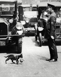 A New York City policeman stops traffic for a mother cat to carry one of her kittens across the street, Pictures in History I Love Cats, Cute Cats, Funny Cats, Animals And Pets, Funny Animals, Cute Animals, Animal Memes, Baby Animals, Crazy Cat Lady