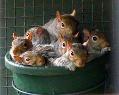 A Bucket full of Squirrels by Justin Ash, via Flickr