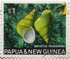Emerald_green_snail_Papua_and_New_Guinea_Guinea_stamp_shell_Papustyla_pulcherrima.610.0xb160115d7512d97.DSC_5349.jpg.aspx