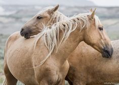 Wild horses loving.