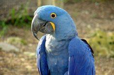 JSPuzzles - Jogue quebra-cabeças online - Blue Parrot