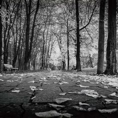 #black #white #blackandwhitephoto #blackandwhitephotography #naturescape #naturephotography #nature #park 🏞#lines  #trees #blackandwhite #dslr #dslrphotography #romania #orastie