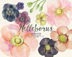 Welcome to GrafikBoutique!  This set of high quality hand painted watercolor flower images may be used for: – printed paper stationery (tags, wrapping paper, packaging, invitations, cards, labels) – digital or paper scrapbooking – home decor (pillows, towels, napkins) – fashion (t-shirts, totes, aprons) – other DIY projects  This item includes 37 floral elements: 14 flowers and 23 green floral elements. Total 74 separate digital files.  Item details:  37 JPEG files. (300 dpi, RGB, white…