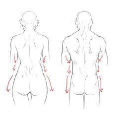 肋骨(広背筋)のカーブに沿ったライン 腰(腸骨)にかけてのライン 腰から太ももにかけてのライン とお大きく分けて3つのラインがあります。