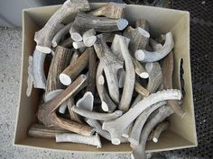 1 POUND of Deer and Elk Antler Dog Chew Toys Pick your by Furries, $18.99