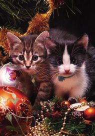 May all the joy and wonder of Christmas remain with you always! Merry Christmas Cat, Christmas Animals, Christmas Goodies, I Love Cats, Crazy Cats, Cute Cats, Kittens Cutest, Cats And Kittens, Winter Cat