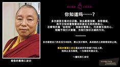 179---Sharpei-Rinpoche-CHI