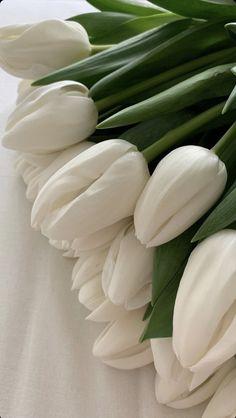 Plant Aesthetic, Flower Aesthetic, White Aesthetic, Aesthetic Pics, Aesthetic Pastel Wallpaper, Aesthetic Wallpapers, Flower Phone Wallpaper, White Tulips, White Tulip Bouquet