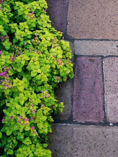 Pretty Lamium is an easy-care groundcover that blooms throughout the summer. Find more easy-growing groundcovers: http://www.bhg.com/gardening/flowers/perennials/easy-ground-covers/?socsrc=bhgpin061912#page=6