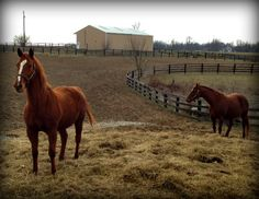 The highlight of today's Kentucky horse farm tour for my client had to be the horses. They all seemed happy to see us despite the cold temperatures.