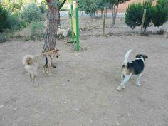 Ratos en el parque canino 07/16
