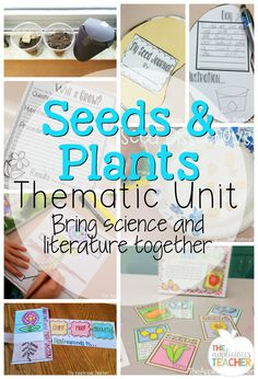 Seeds and plants the
