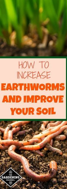 How to increase earthworms in your soil. Plants thrive in nutrient rich soil. Worms can provide organic matter that makes the plants in your garden happy.