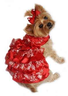 """Labor Day Sale 2014 now through Monday at SimplyDogStuff.com.  Enter coupon code """"laborday"""" at checkout for 15% off entire purchase including sale items.  Beautiful Red Satin and White and Gold Organza Dog Dress from Simply Dog Stuff, $32, perfect for holidays or special occasion."""