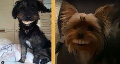 Hymyä+huuleen!+Koirat+varastivat+tekohampaat+–+nämä+videot+saavat+purskahtamaan+nauruun