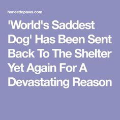 'World's Saddest Dog' Has Been Sent Back To The Shelter Yet Again For A Devastating Reason Awesome Stories, Shelter, Sad, World, Dogs, The World, Doggies, Pet Dogs, Dog