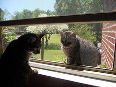 Violet and Meeko