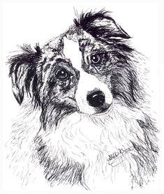 A pen and ink drawing of an an australian shepherd dog