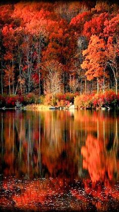 autumn scenery I love this picture. Fall Pictures, Nature Pictures, Autumn Photography, Landscape Photography, Jardim Natural, Autumn Scenes, Nature Wallpaper, Wallpaper Backgrounds, Landscape Photos