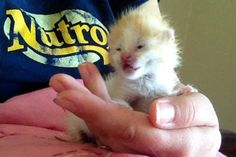 Meet foster kitten Miracle. He is not 2 weeks old. Eyes are just about all the way open. #rescueanimals #adoptapet