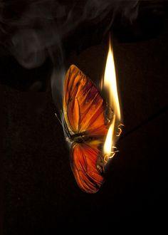 Matt Collishaw | Burning Butterflies | art, curiosities, insects, photography, dark, magic