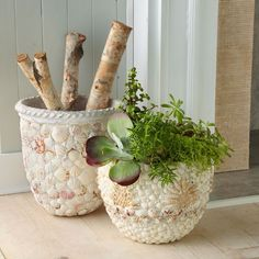 shell pots and vases....OR THE BATHROOM TRASH PAIL AND TINY TERRA COTTA POTS FOR COTTON BALLS AND Q-TIPS