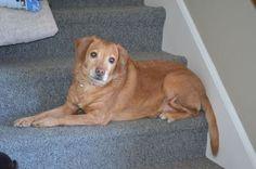 Introducing ... Blind Darla! New Hampshire, Rolling Dog Farm