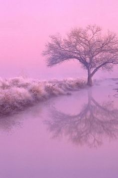 My heart is tuned to the quietness that the stillness of nature inspires. ~Hazrat Inayat Khan