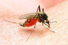 Oprysk przeciw uciążliwym komarom