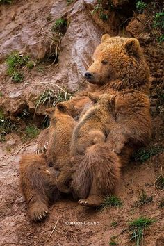 MaMa and her cubs