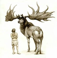 Size of the extinct Irish Elk (Megaloceros giganteus) relative to a hunter-gatherer. The largest deer ever discovered it stood up to 7 ft at the shoulder and weighed up to 1600 lbs. (by Philip Newsom) Prehistoric Dinosaurs, Prehistoric World, Prehistoric Creatures, Prehistoric Wildlife, Irish Elk, Magnificent Beasts, Spinosaurus, Dinosaur Art, Extinct Animals