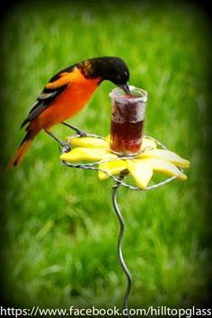Fused glass yard art flower - Oriole grape jelly feeder.  Created by Hilltop Glass Creations