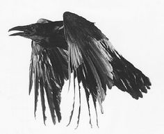 Etched bird