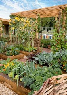 Here are the Home Vegetable Garden Design Ideas. This article about Home Vegetable Garden Design Ideas was posted under the Home Design category. If you want to see more Ideas in Home Design category, you can visit that category page. Biointensive Gardening, Potager Bio, Backyard Vegetable Gardens, Vegetables Garden, Apartment Vegetable Garden, Home Vegetable Garden Design, Vertical Vegetable Gardens, Urban Garden Design, Container Vegetables