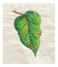 leaf painting on fabric with Inktense pencils