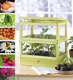 Grow-Up Greenhouse ™ Kit in Kids Gardening - Kids can show off their green thumb with this greenhouse kit! Perfect for a windowsill, it's a fun building project for families to share, and a great way to get a jump start on spring gardening, even in the middle of winter!