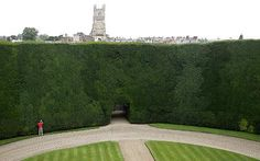 Google Image Result for http://i.telegraph.co.uk/multimedia/archive/00789/Yew-Hedge_789388c.jpg