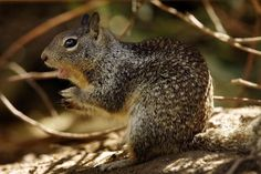 Smart Animals: Ground Squirrel Use the Sun for Navigation