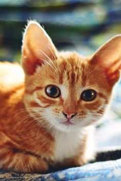 """Kittens are wide eyed, soft and sweet with needles in their jaws and feet."" --Pam Brown"
