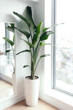 Fake Plants Decor, House Plants Decor, Plant Decor, Birds Of Paradise Plant, Plantas Indoor, Decoration Plante, Poisonous Plants, Alpine Plants, Garden Types