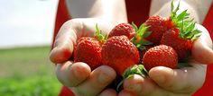 Emma Lea Farms Farms, Strawberries, Vancouver, Fruit, Ideas, Food, Homesteads, Strawberry Fruit, The Fruit