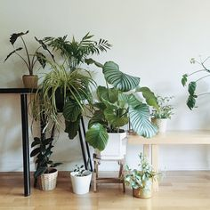 Plants in our home.
