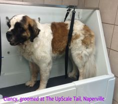 The UpScale Tail, Pet Grooming Salon, Naperville www.theupscaletail.com
