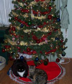 kitty presents!!