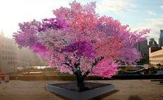 """1本の木から40種類ものフルーツが採れる…そんなウソのような話が現実に! この""""40種類の実がなる木""""の開発者は、ニューヨーク州のシラキュース大学の美術教授、Sam Van Aken氏。 一見、普通の木となんら変わりのない姿に見える。 しかし春になると、木は鮮やかな赤やピンクの花をつけ、後にプラムやアーモンド"""