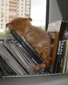 Cat in a stack on a rack.