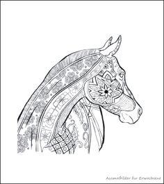 die 31 besten bilder von ausmalbilder pferde   malbögen, malbücher und malvorlagen