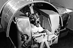 Remembering Laika, Space Dog and Soviet Hero - Alex Wellerstein examines the legacy of Laika, the Soviet space dog launched sixty years ago aboard Sputnik humanity's second-ever satellite. Space Disasters, Laika Dog, Belka And Strelka, Yuri, Dog Facts, Space Race, Bow Wow, The New Yorker, Fun To Be One